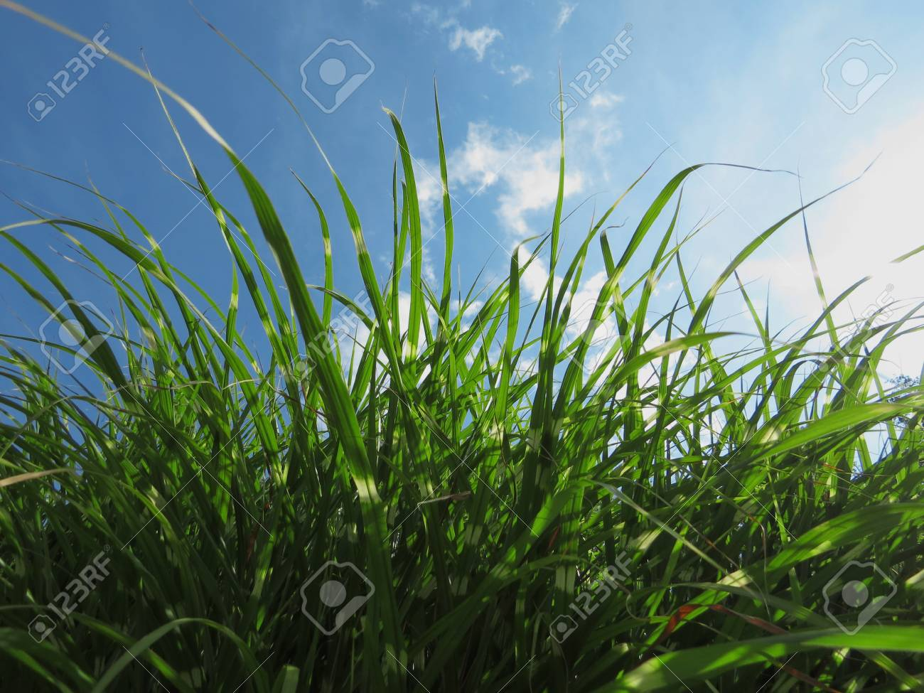 Grass  in front of the sky Stock Photo - 22177404