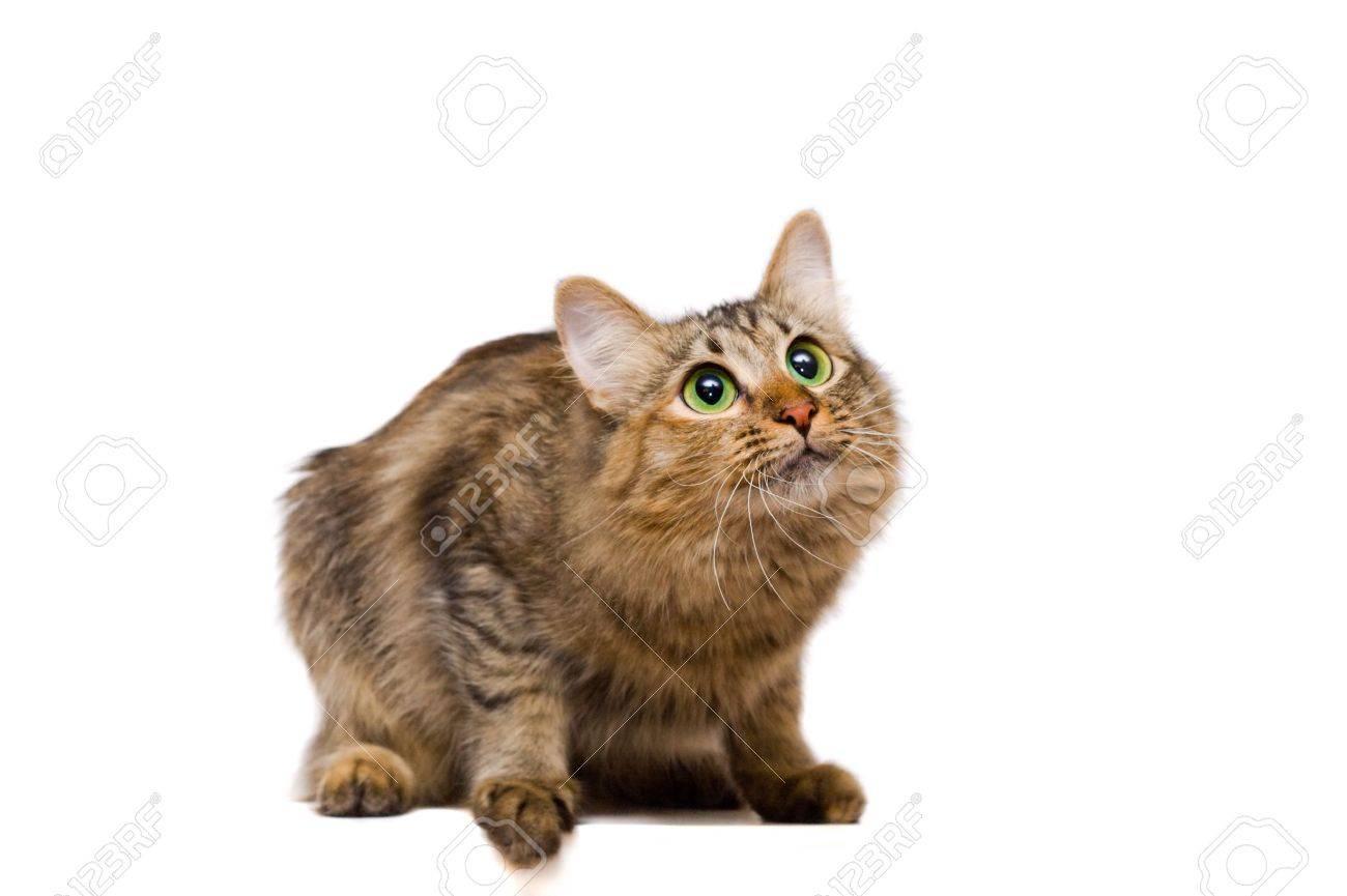 redheaded cat Stock Photo - 3438696