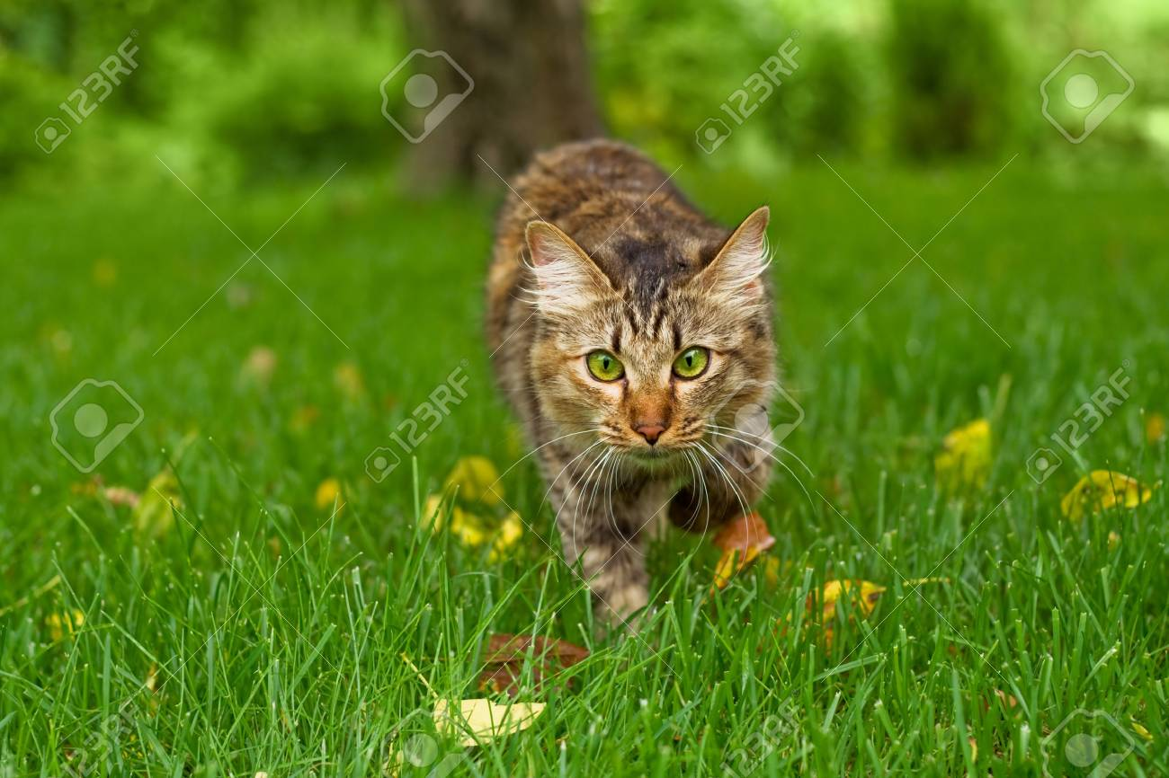 Small cat is hunting in green grass Stock Photo - 3959776