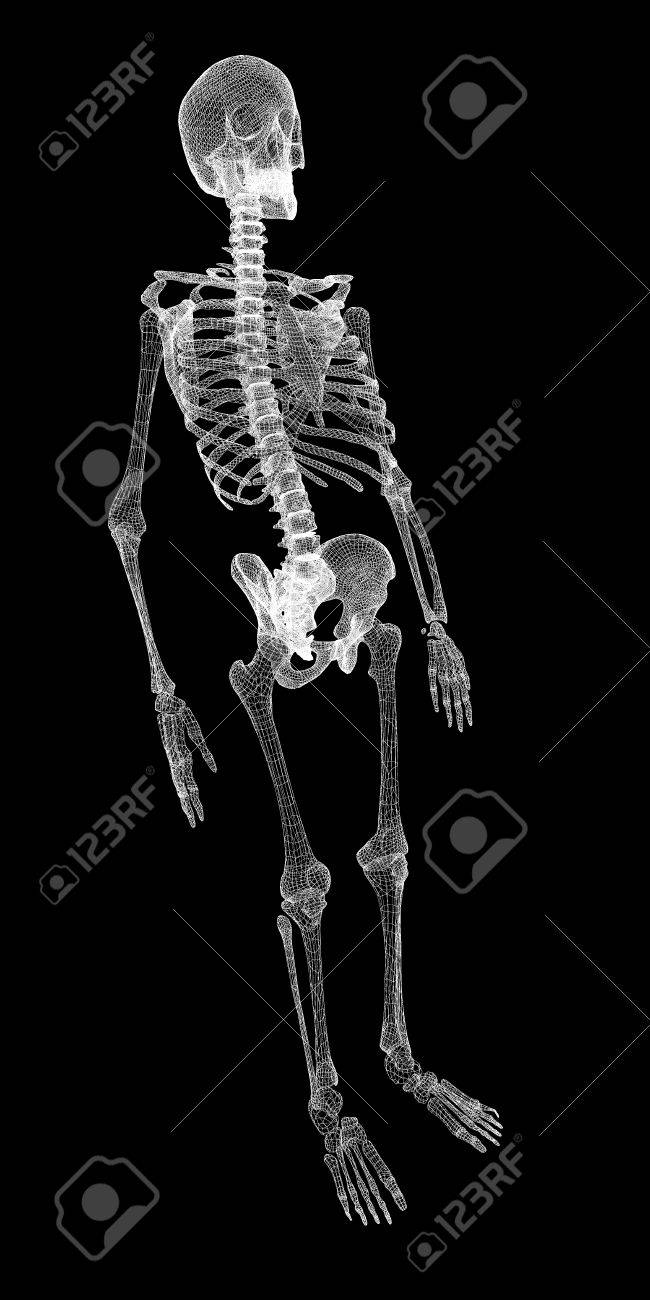 Human Body, Skeleton , Body Structure , Wire Model Stock Photo ...