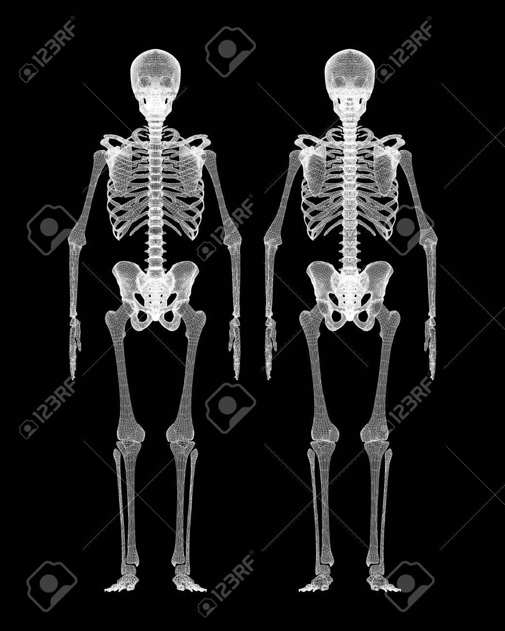 Cuerpo Humano, Esqueleto, Estructura De La Carrocería, Modelo De ...