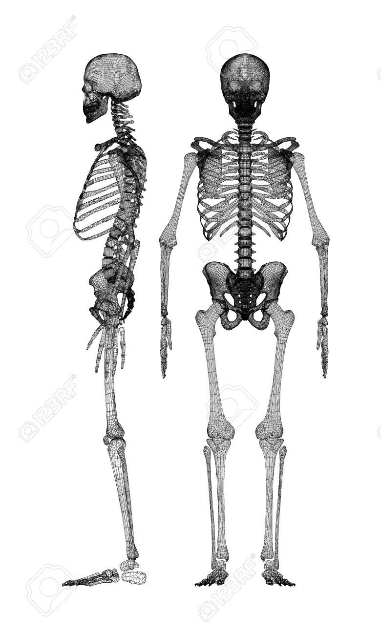 Perfecto Los Huesos Del Esqueleto Humano Marcado Foto - Imágenes de ...