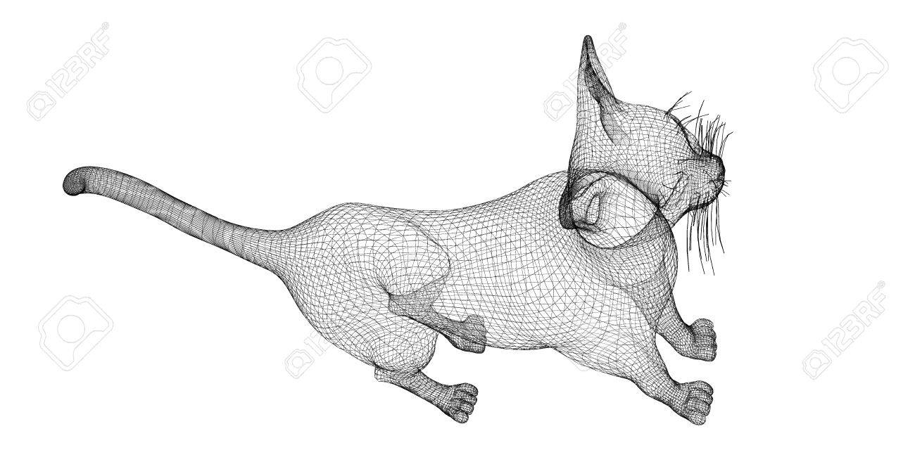 Cat, Body Structure , Wire Model, On Background Stock Photo, Picture ...