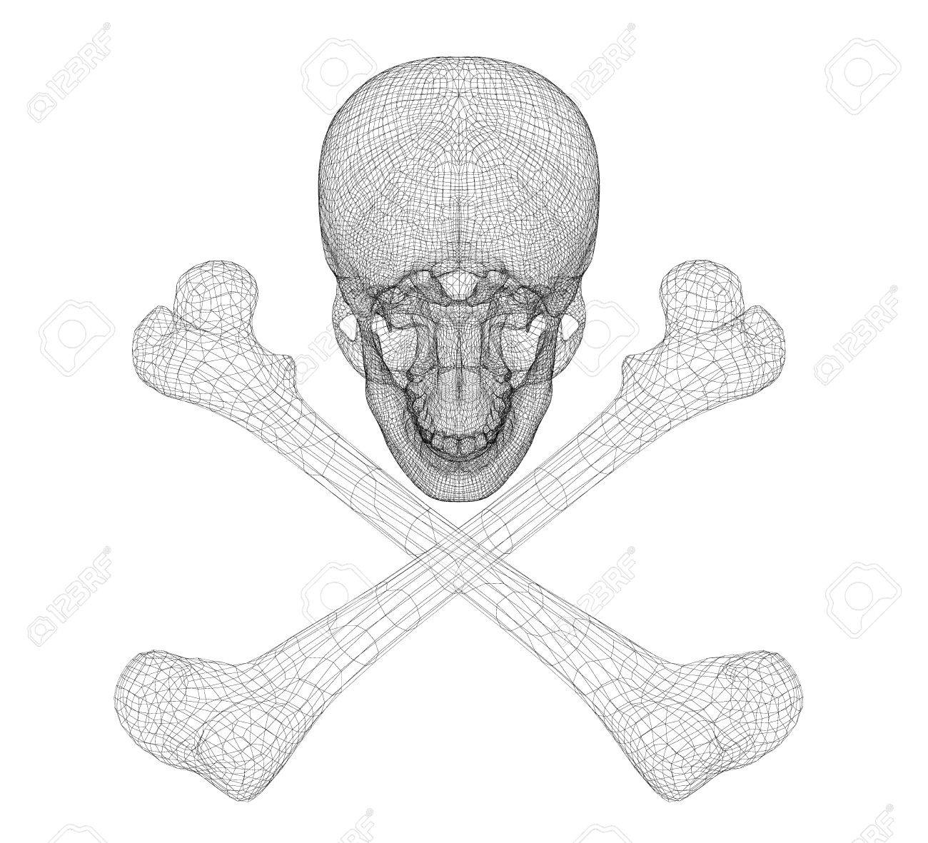 Skull And Bones Human Body Body Structure Wire Model Stock Photo