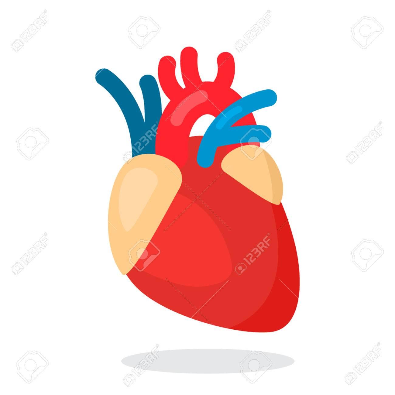 human heart anatomy heart medical science vector illustration rh 123rf com Medical Heart Cartoon Medical Heart Drawing