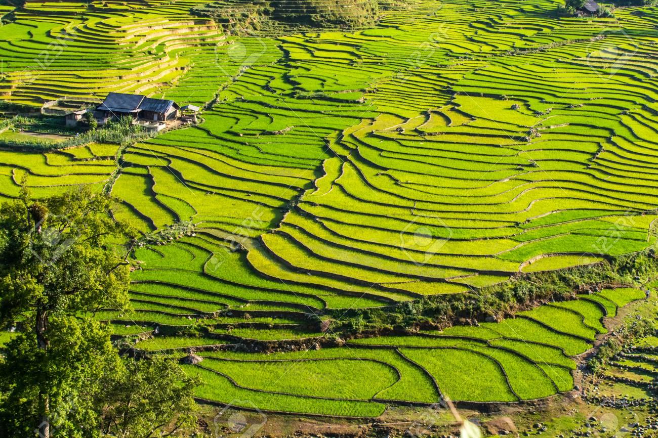 Valle Tra Le Terrazze Di Riso. Coltivazione Del Riso Foto Royalty ...