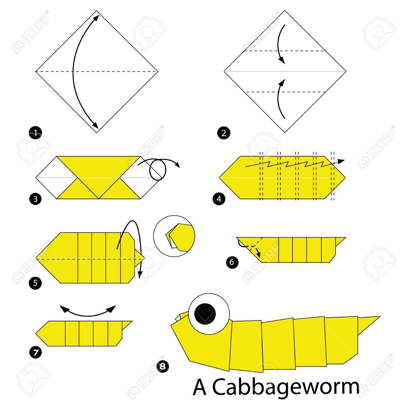 Step By Instructions How To Make Origami A Cabbage Worm Stock Vector