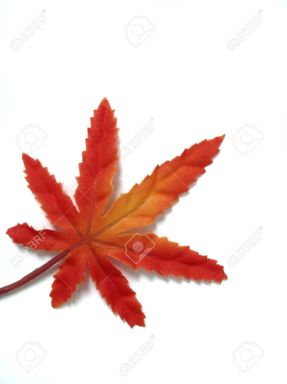 Red maple leaf Stock Photo - 21212882