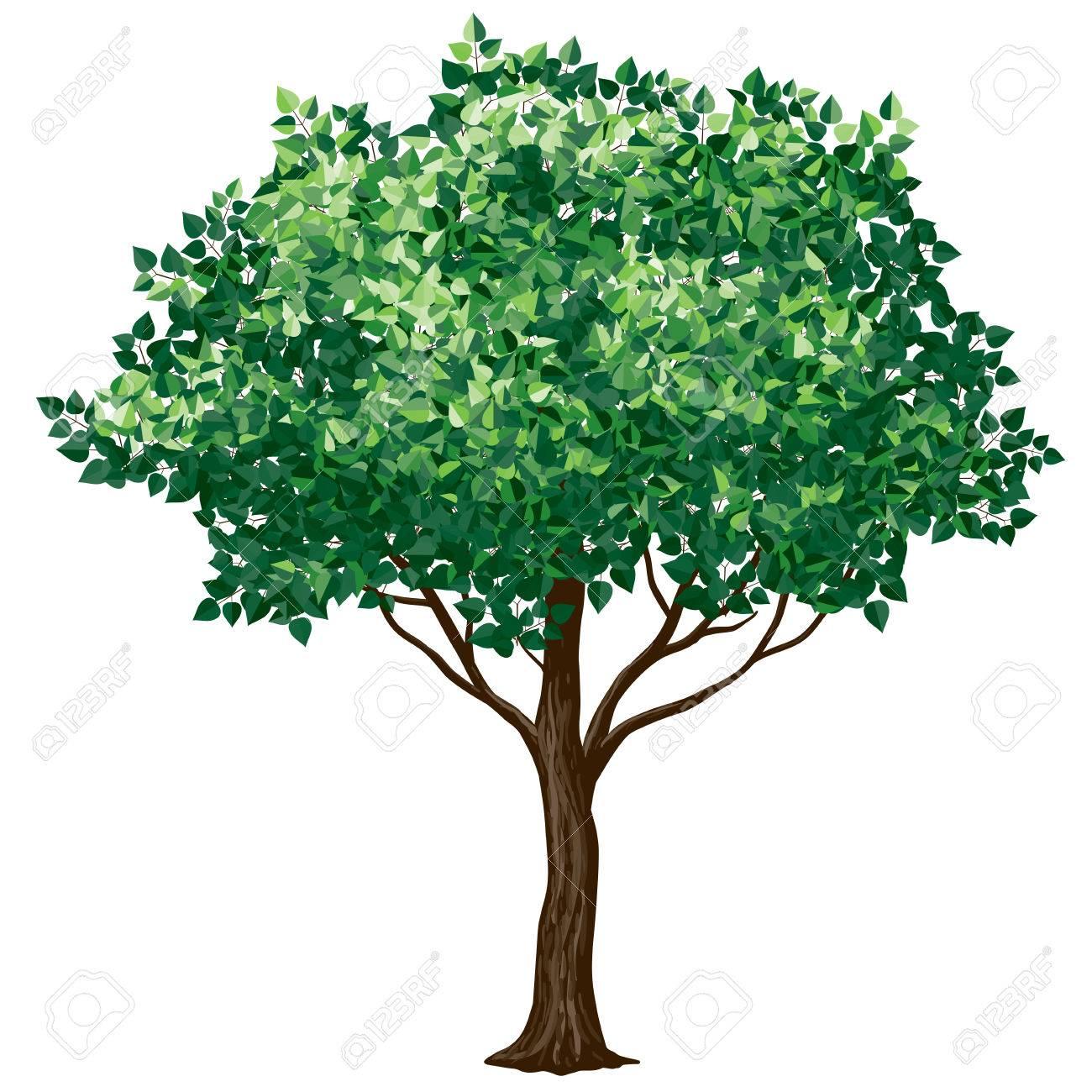 Baum In Blüte Isoliert Auf White.CMYK. Organisiert Von Schichten. 4 ...