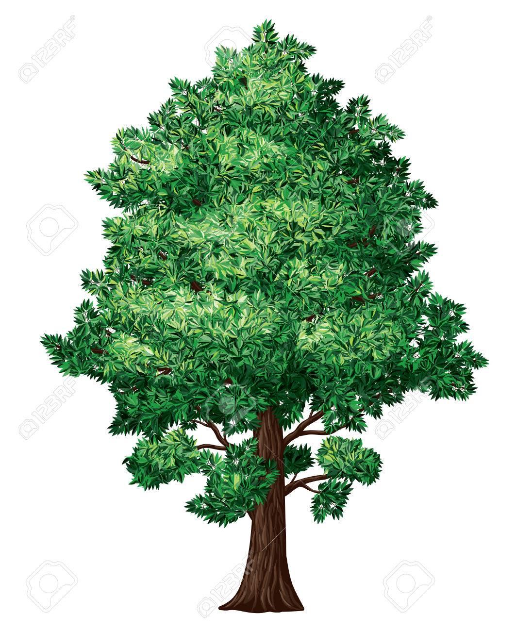 Baum In Blüte Isoliert Auf Weiß. Eps8. CMYK. Organisiert Von ...