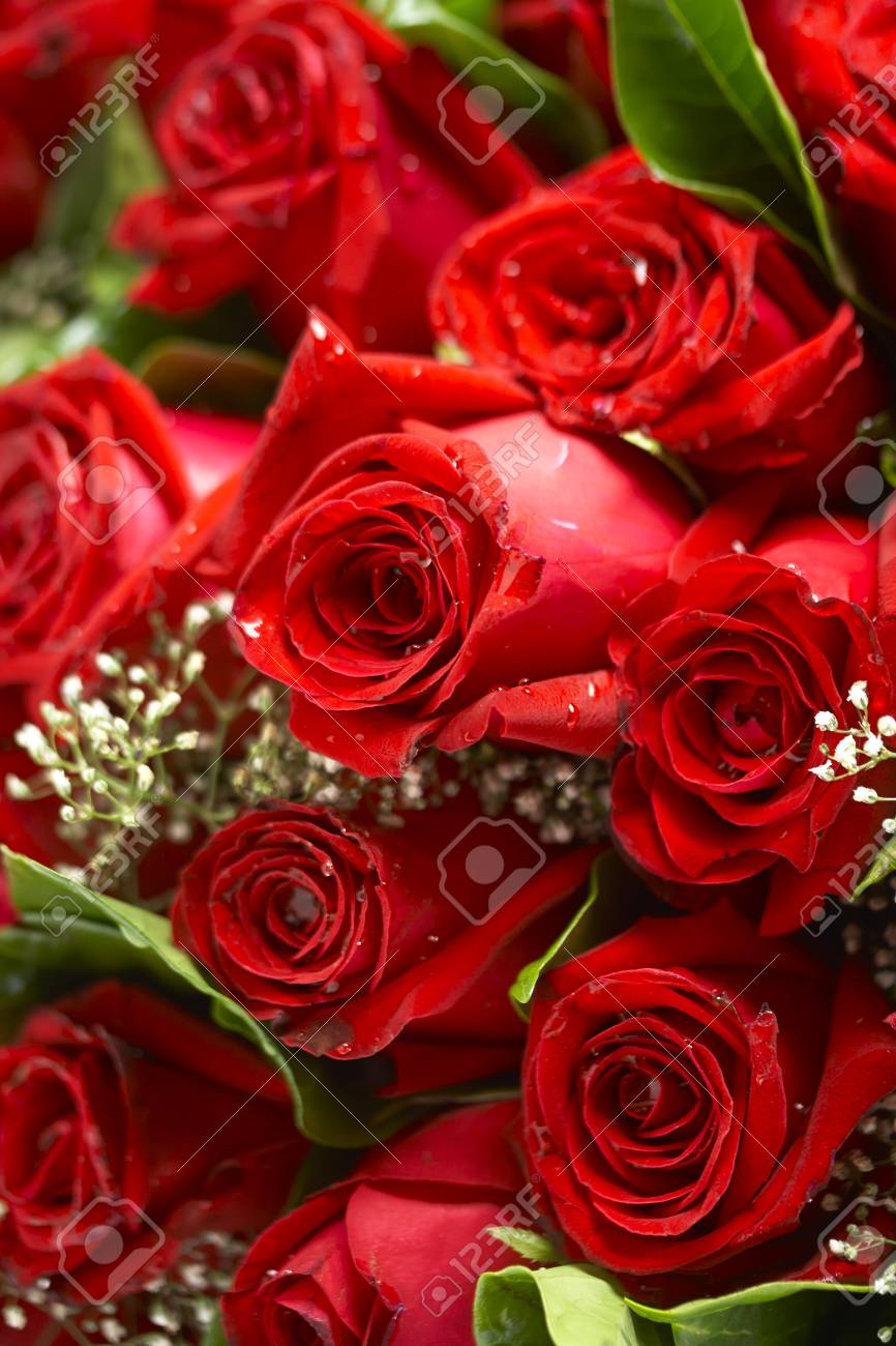 Bouquet of red roses - 38982010