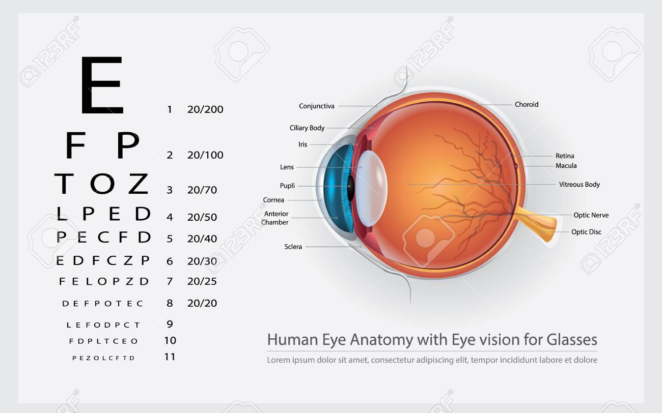 Human Eye Anatomy With Eye Vision For Glasses Vector Illustration ...