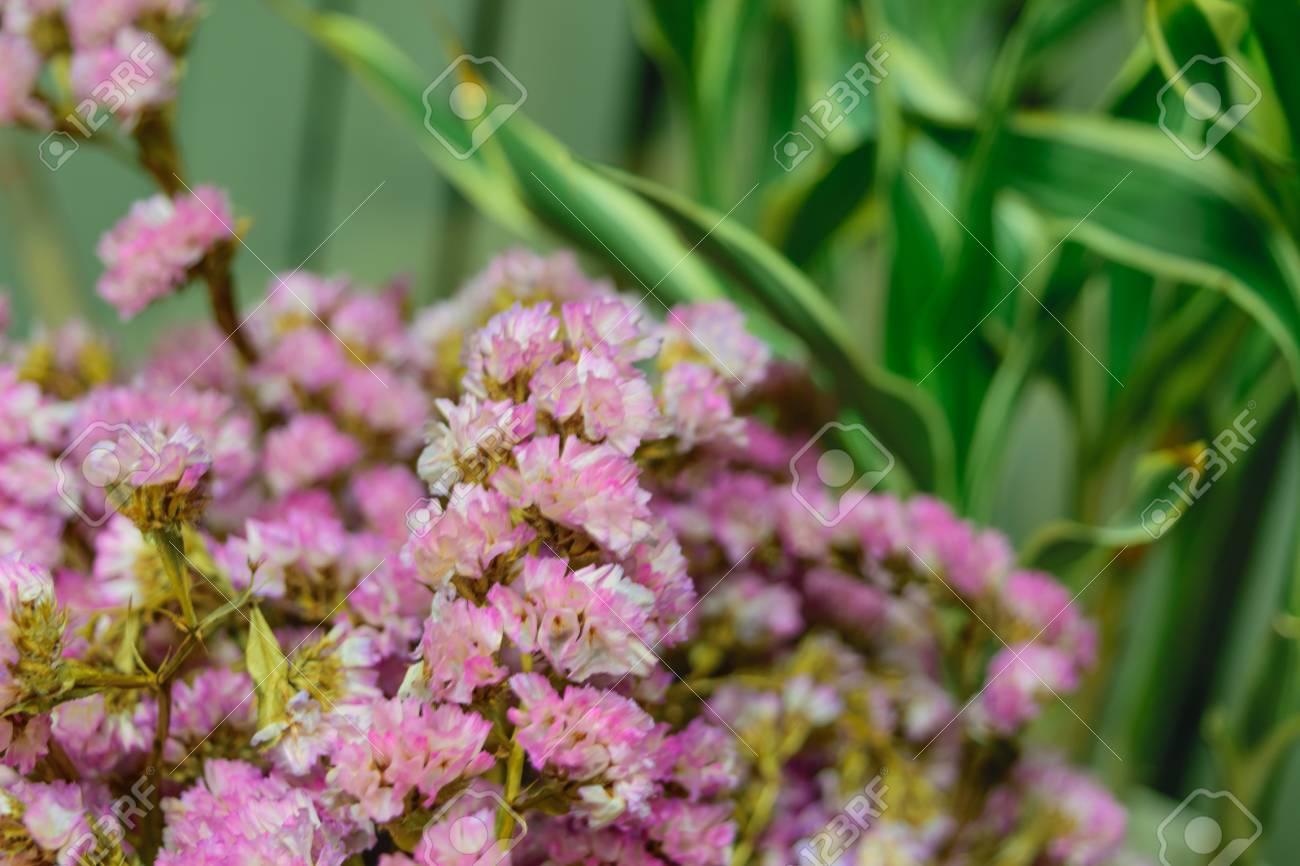 Schöne Purpurrote Blume Natürlich Schöne Blumen Im Garten