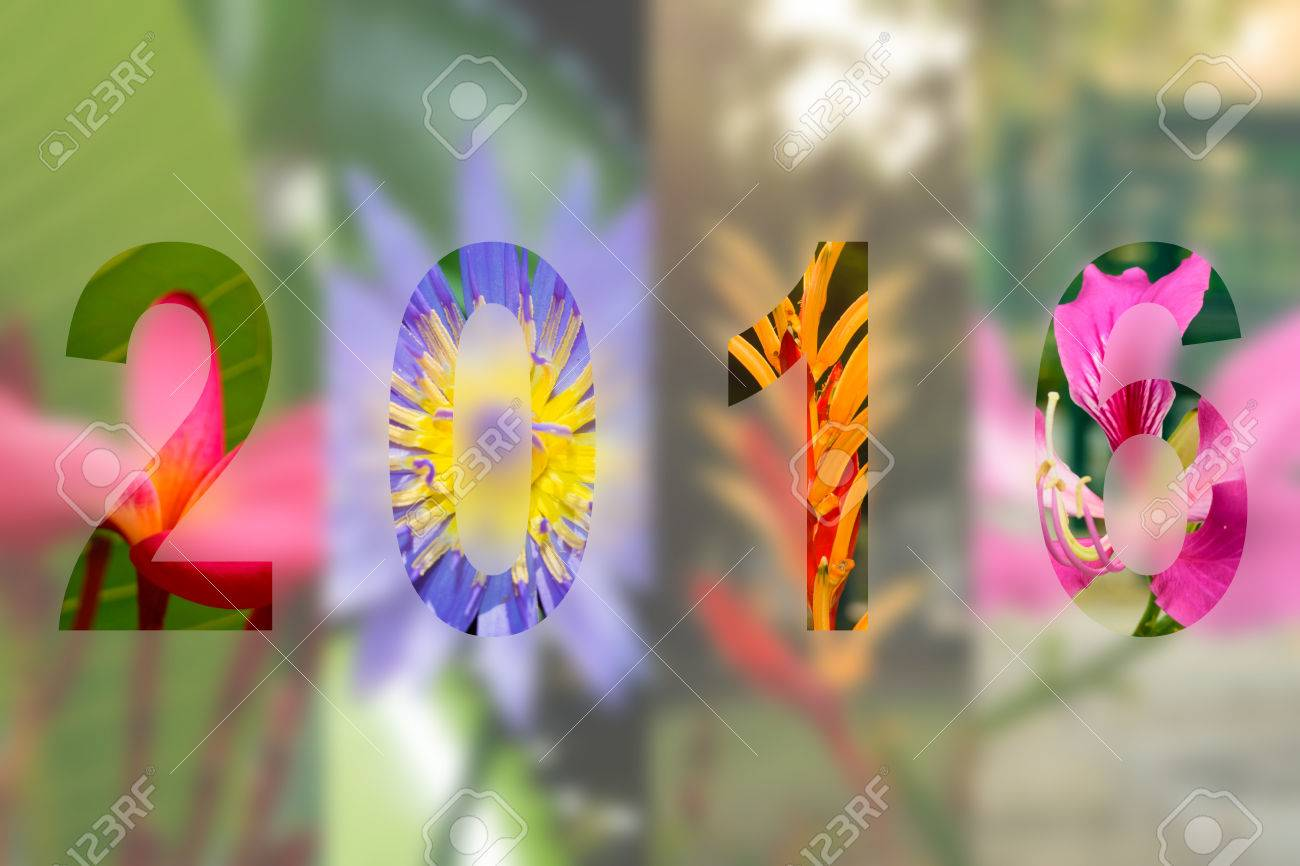 Happy New Year 2016 in Flower Theme, Naturally beautiful flowers in the garden - 45776022
