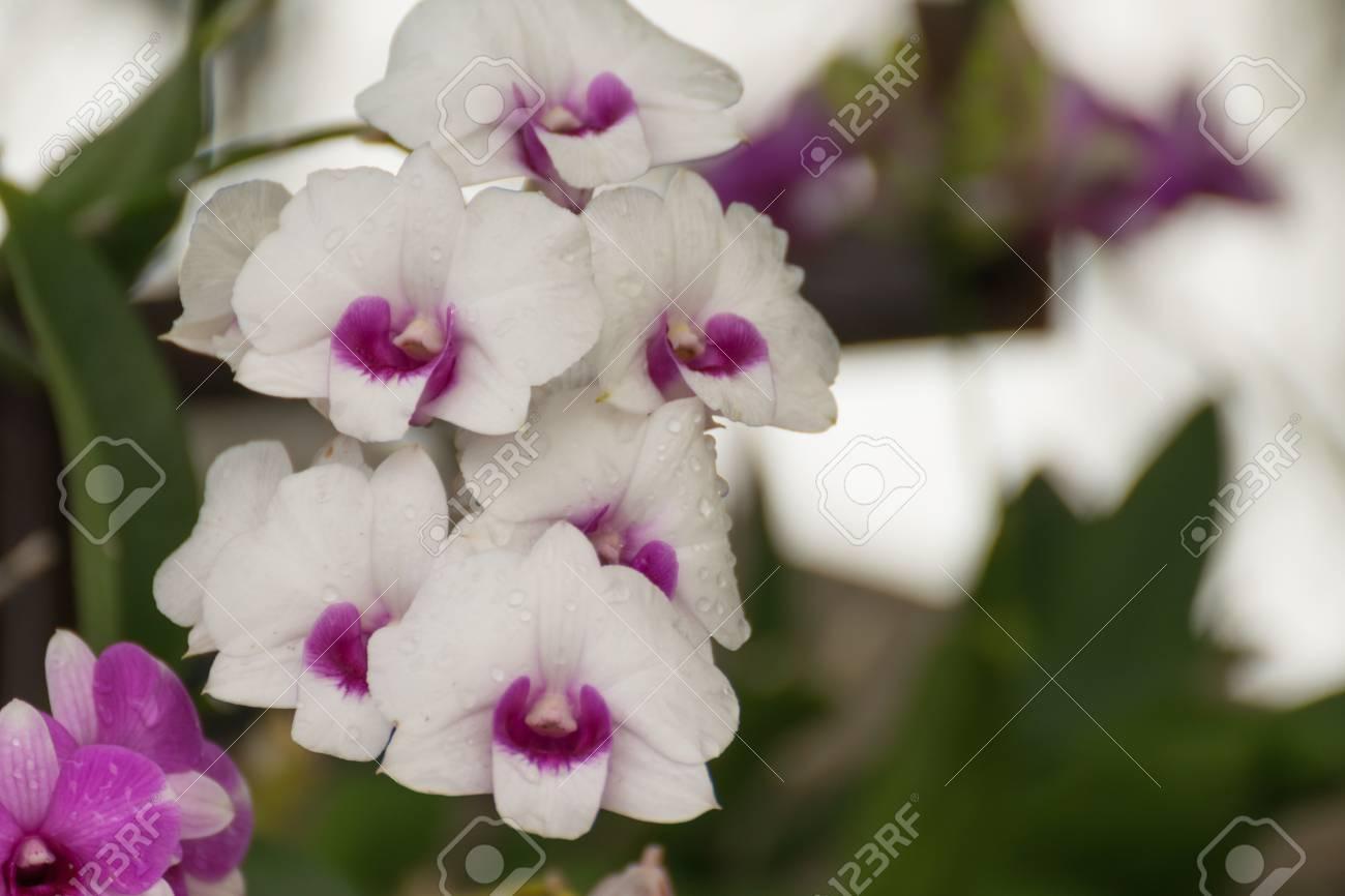 Beautiful Purple White Orchids Flower Naturally Beautiful Flowers