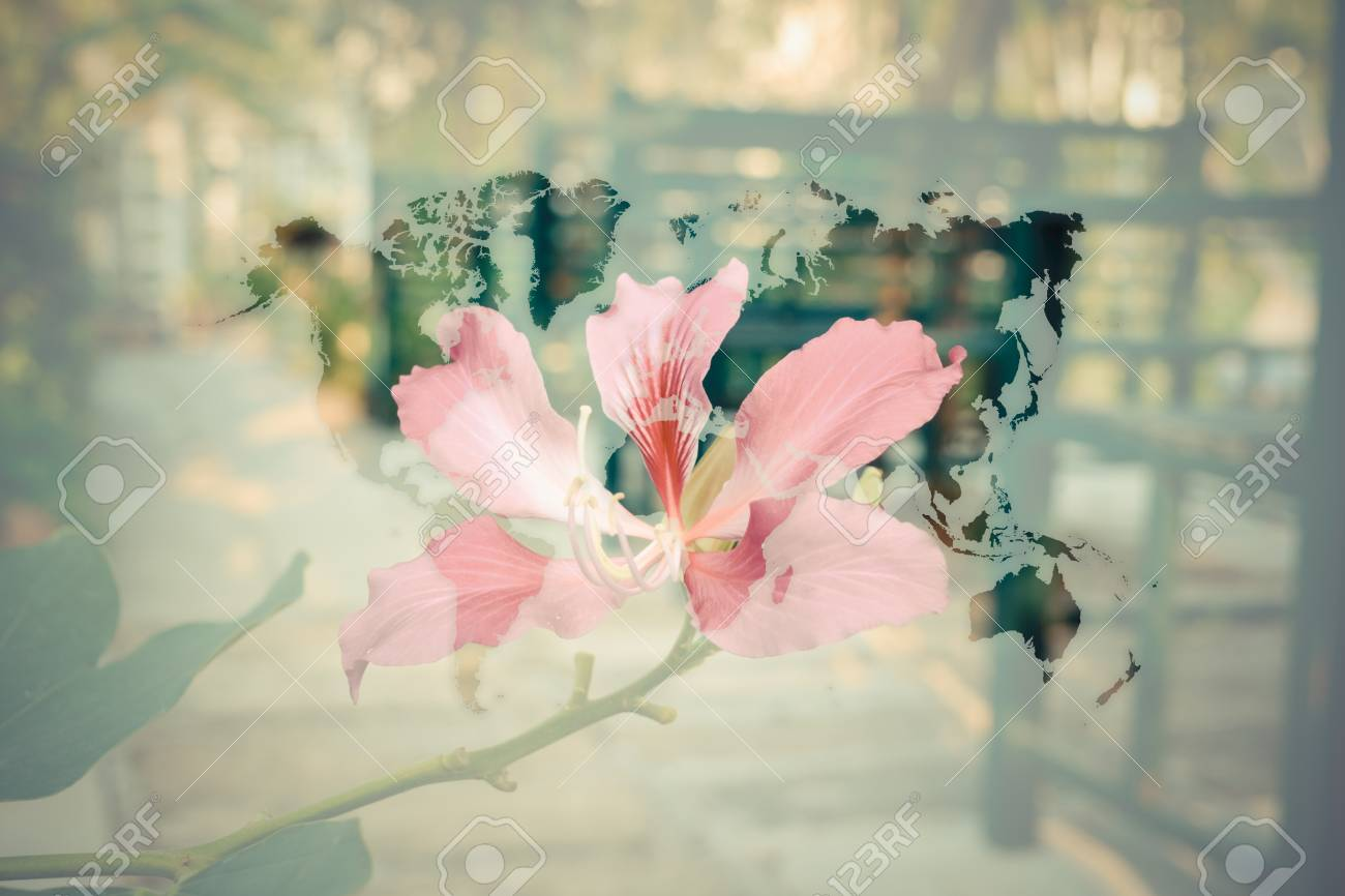 Beautiful flower naturally beautiful flowers in the garden with beautiful flower naturally beautiful flowers in the garden with world map process in vintage izmirmasajfo