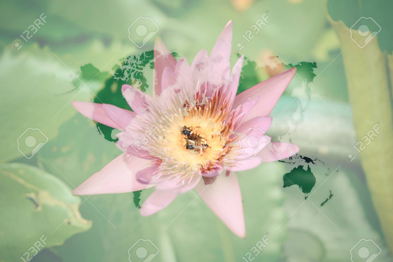 Beautiful lotus flower naturally beautiful flowers in the garden beautiful lotus flower naturally beautiful flowers in the garden with world map process in izmirmasajfo