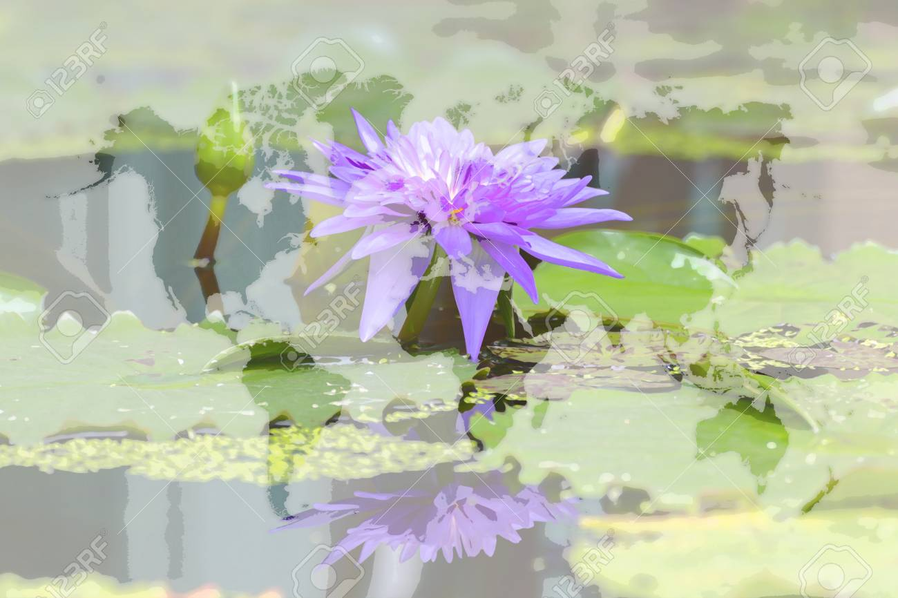 Lotus waterlily flower purple color naturally beautiful flowers lotus waterlily flower purple color naturally beautiful flowers in the garden process in art izmirmasajfo