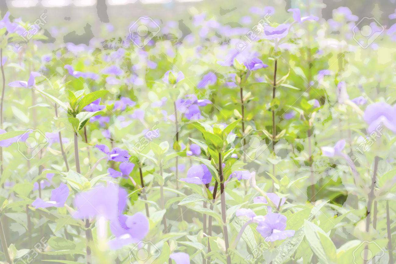 Flower Blue Hawaii Scrophulariacea Blue Purple Color Naturally