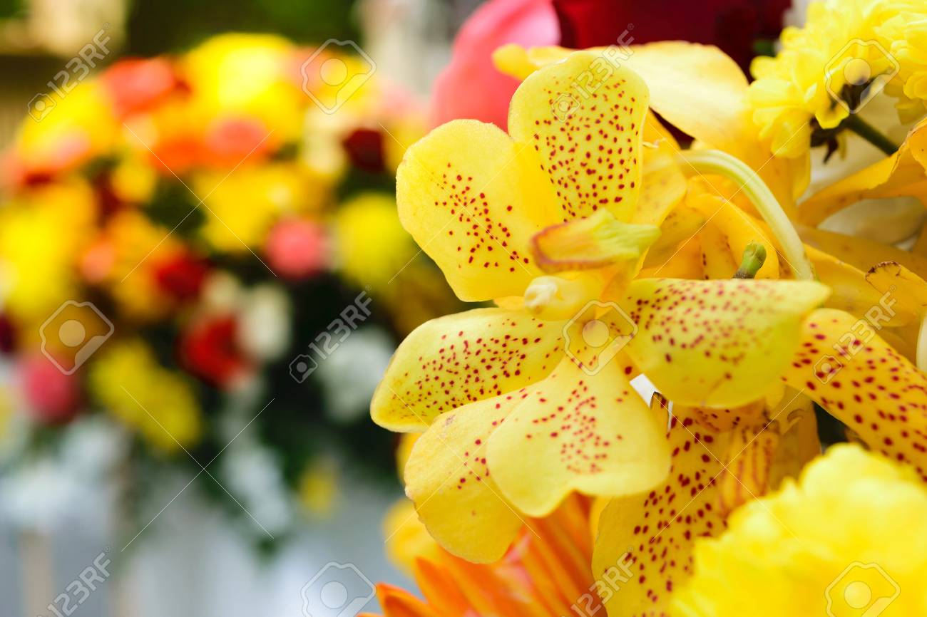 Beautiful orchid flower in a bouquet naturally beautiful flowers beautiful orchid flower in a bouquet naturally beautiful flowers in the garden process in izmirmasajfo