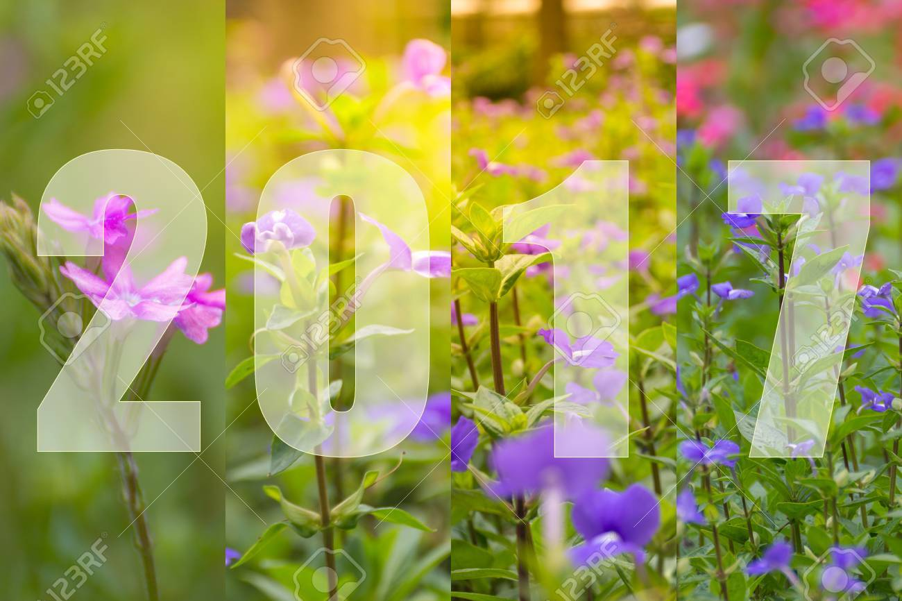 Happy New Year 2017 In Flower Theme Naturally Beautiful Flowers