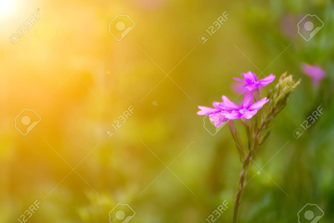 Imagenes De Flores Naturales Bellas Wwwmiifotoscom