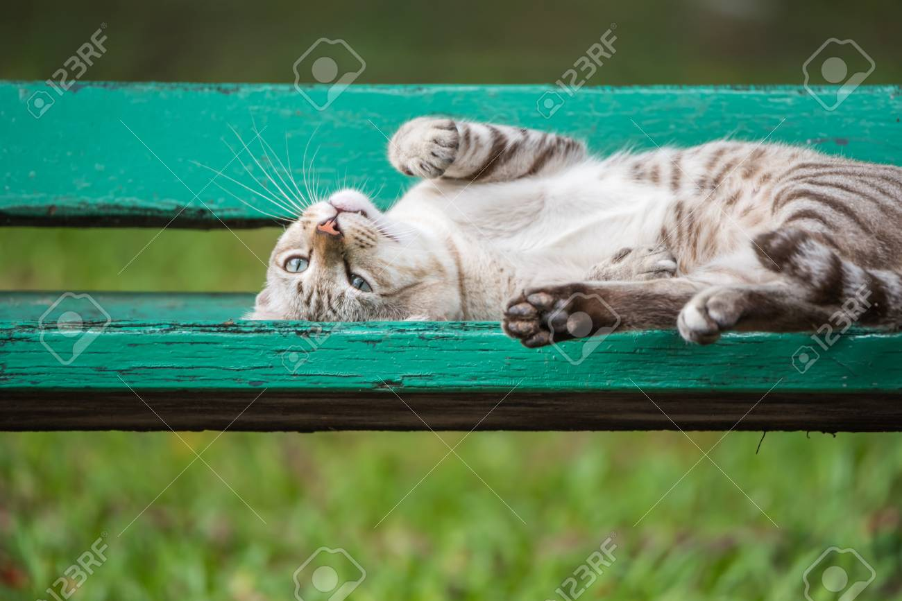 Cat is a animal type mammal and pet so cute gray color sleeping for relax on a outdoor green wooden chair at park with green nature - 90420786