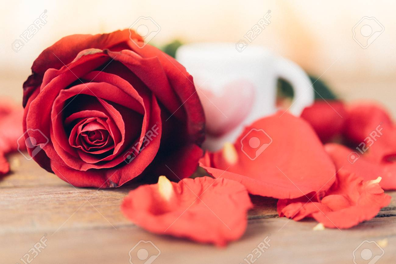Red rose flower nature beautiful flowers from the garden and stock red rose flower nature beautiful flowers from the garden and petal red rose flower and white izmirmasajfo