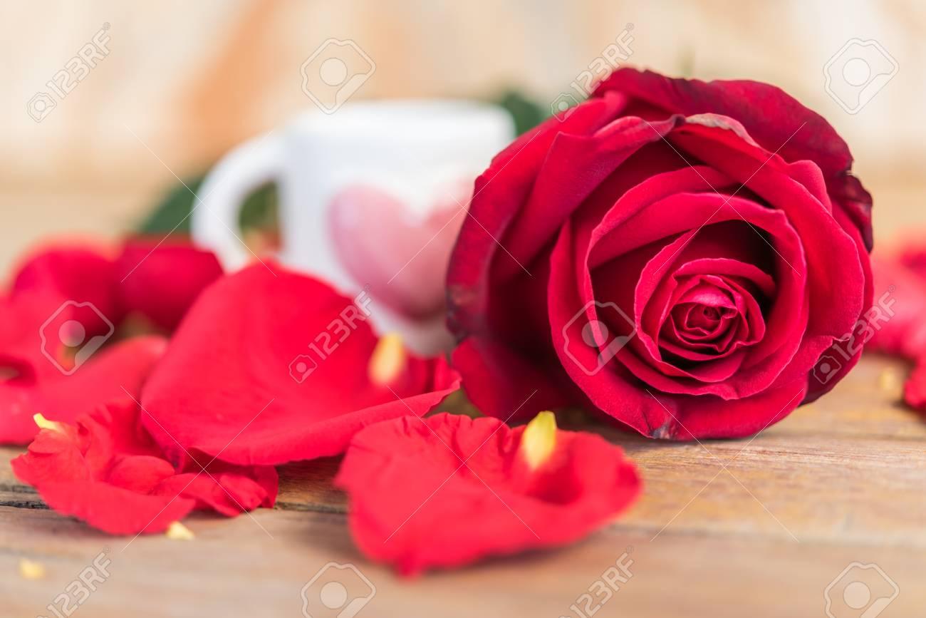 Rote Rose Blume Natur Schöne Blumen Aus Dem Garten Und Blütenblatt