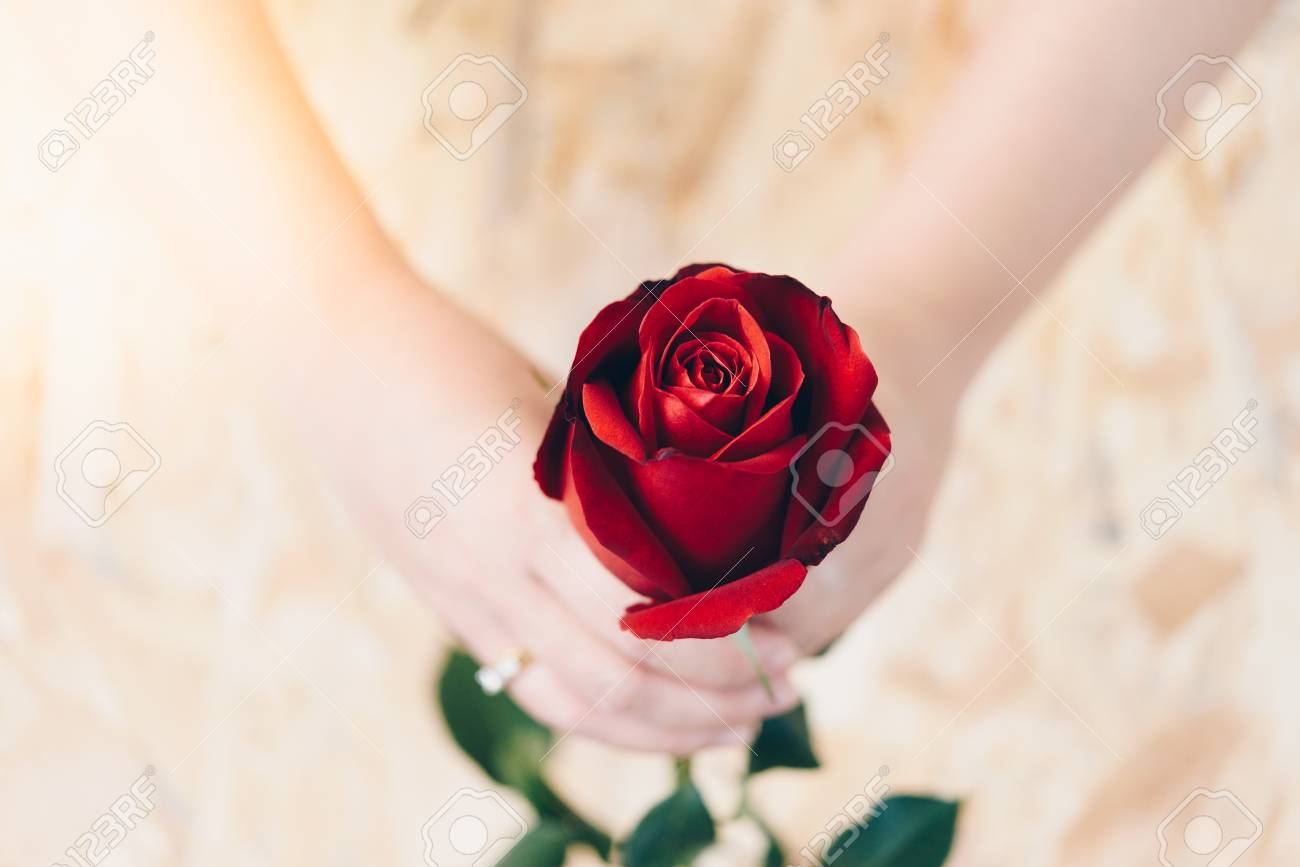 Red rose flower nature beautiful flowers from the garden and stock red rose flower nature beautiful flowers from the garden and human hand holding red rose flower izmirmasajfo