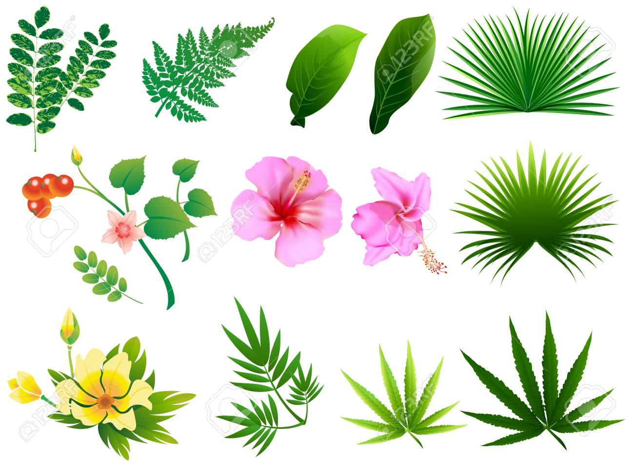 Hojas Tropicales Vector La Ilustración Del Arte De Clip Con ...