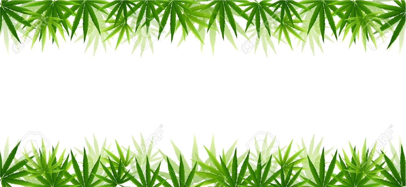 Frame formed with hemp (marijuana) leaves isolated on white background.vector illustration. - 97692300