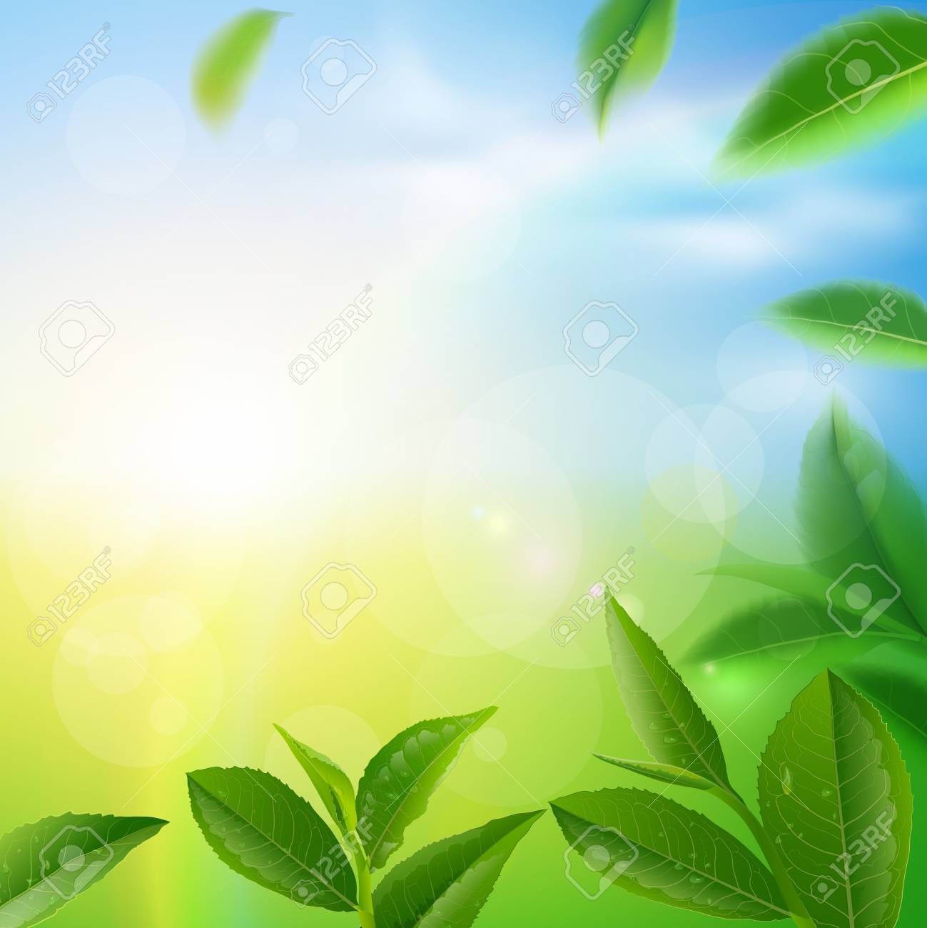 Green tea leaves manu and postcard vector nature background,..
