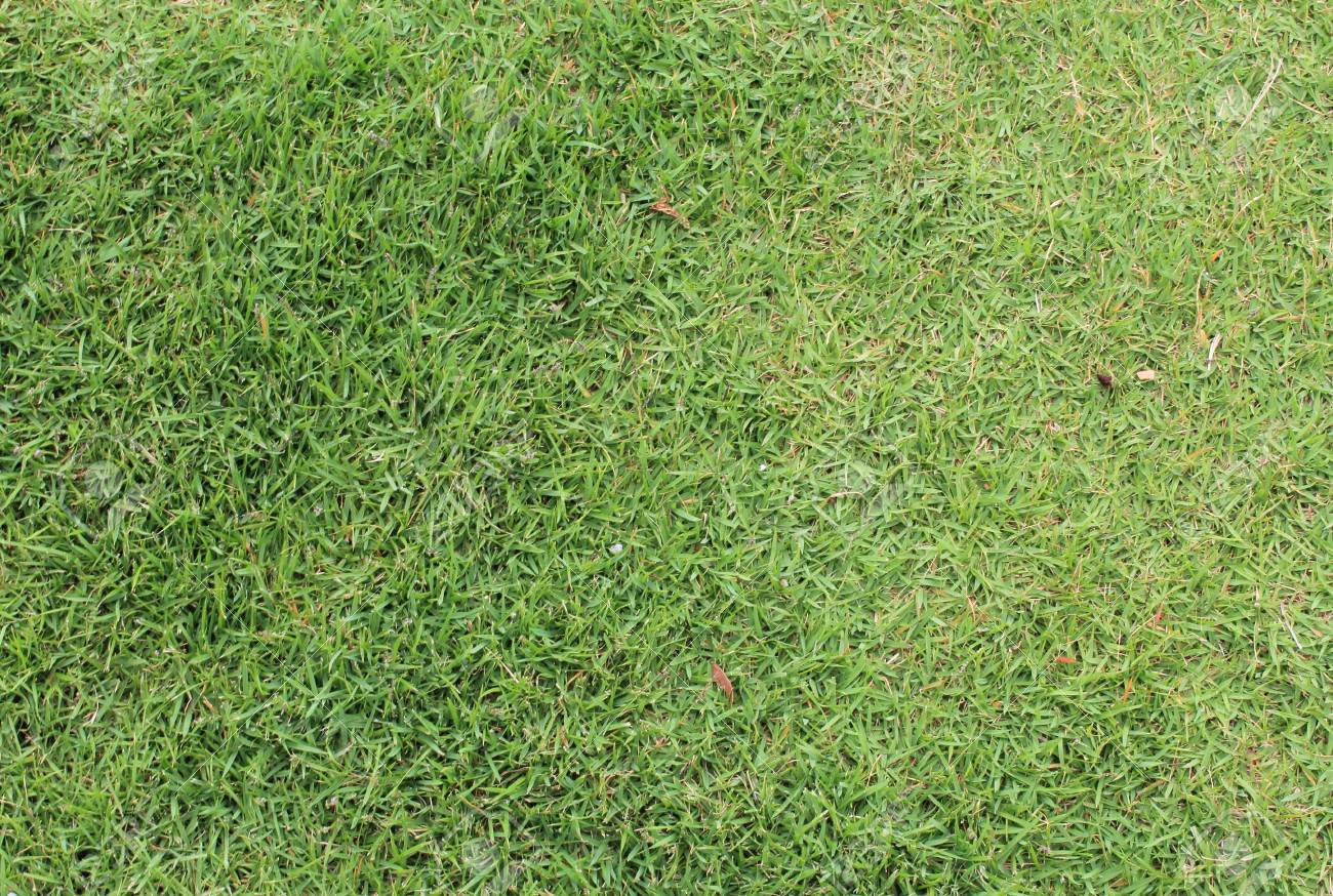 green grass backgrund Stock Photo - 10930209