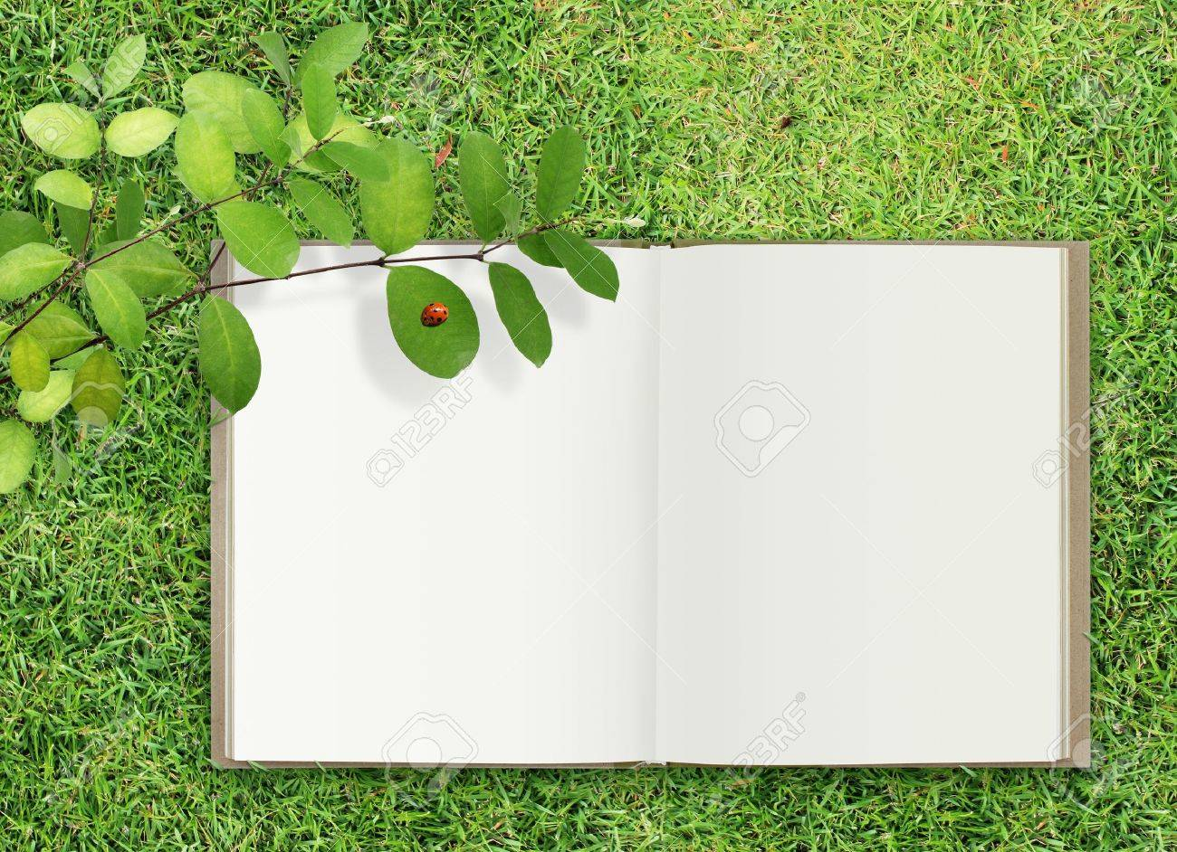 cover page open book on grass stock photo - Free Picture Page