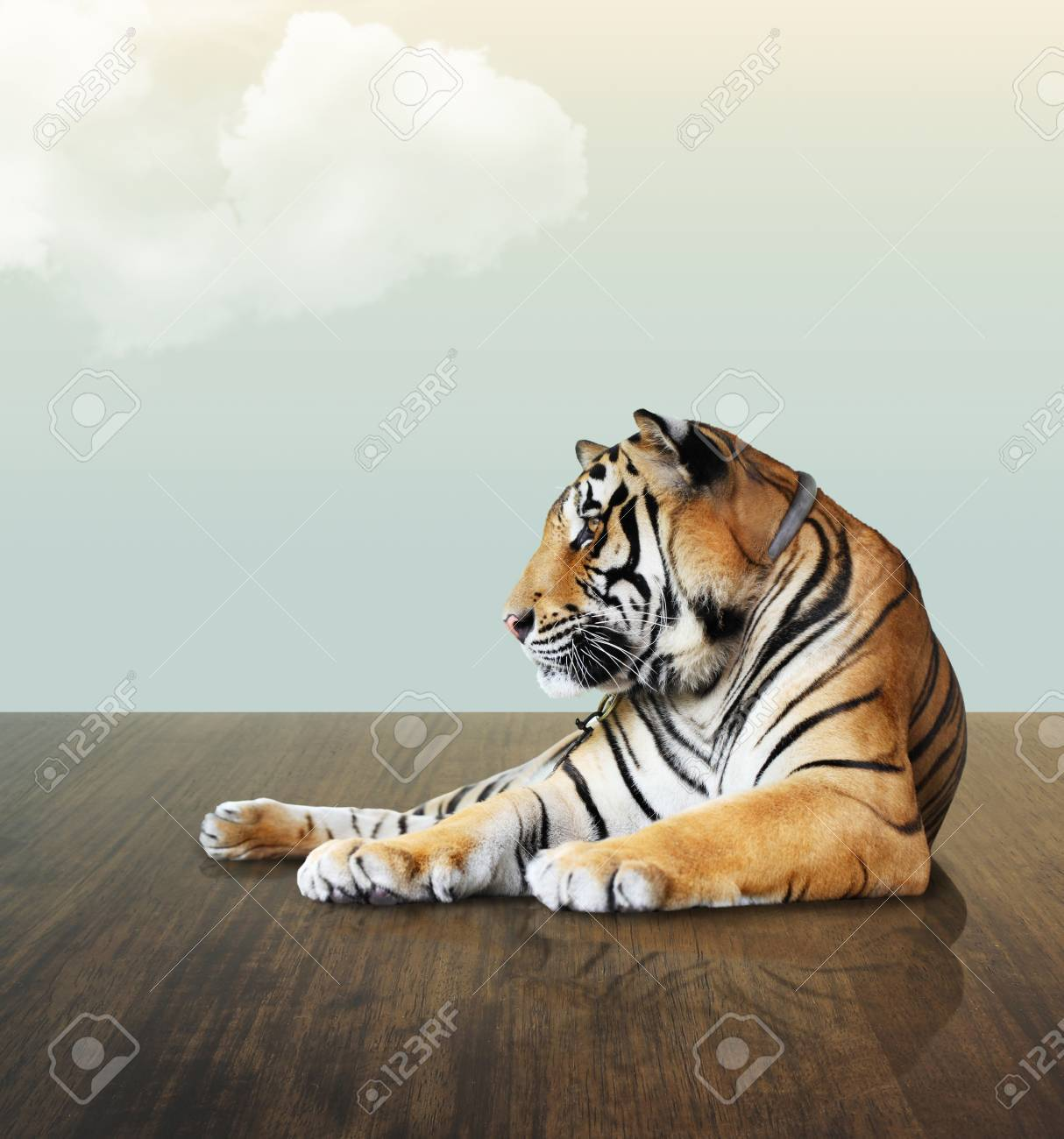 tiger under the sky with cloud on wood floor Stock Photo - 14835590
