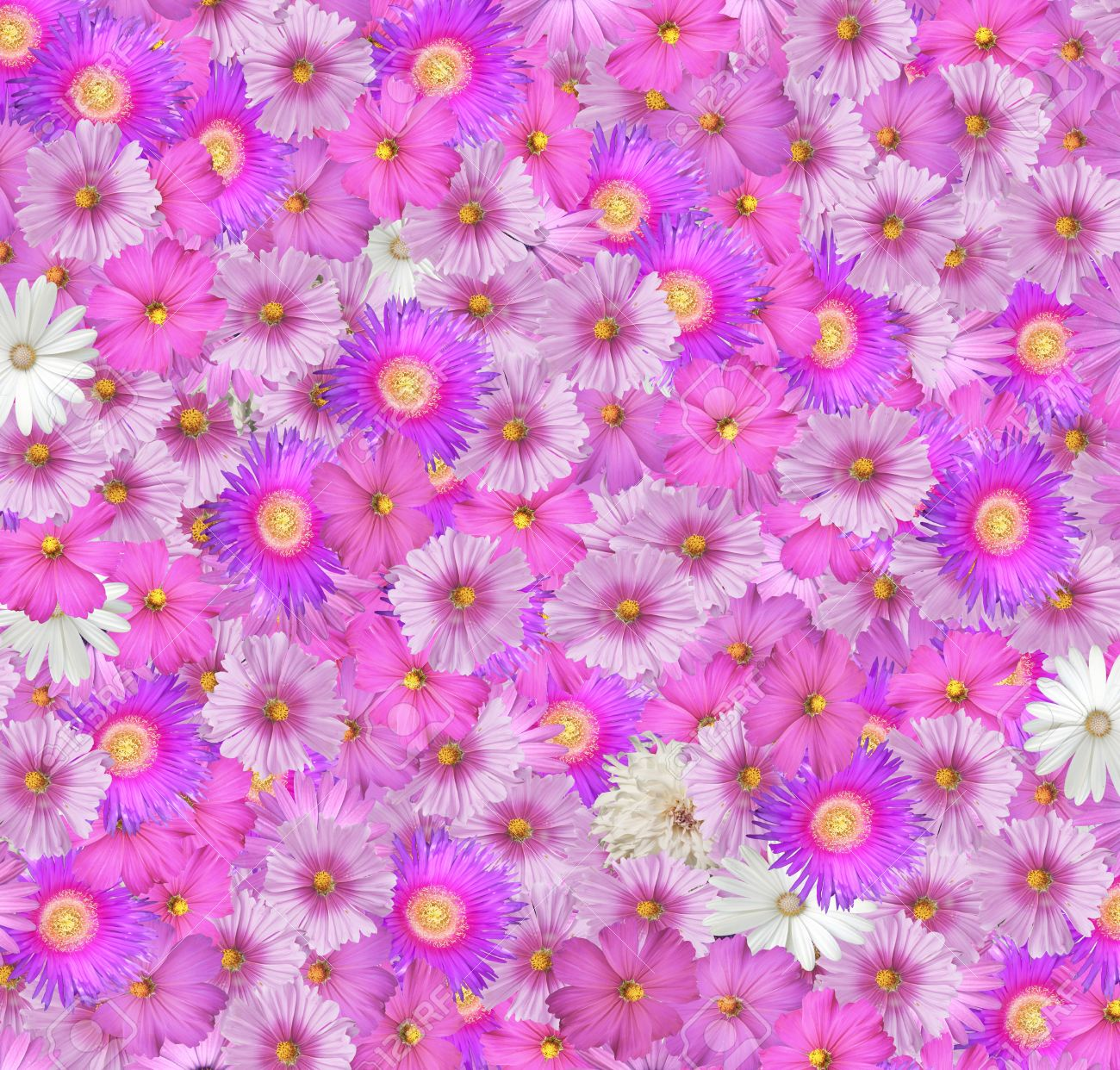 Pretty background of pink and white flowers stock photo picture and pretty background of pink and white flowers stock photo 12726393 voltagebd Gallery