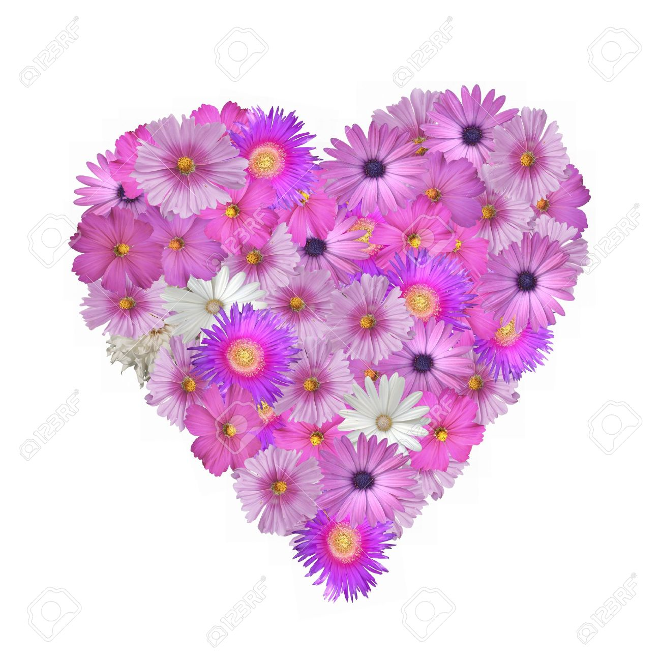 pretty pink flowers in the shape of a heart isolated on white, Beautiful flower