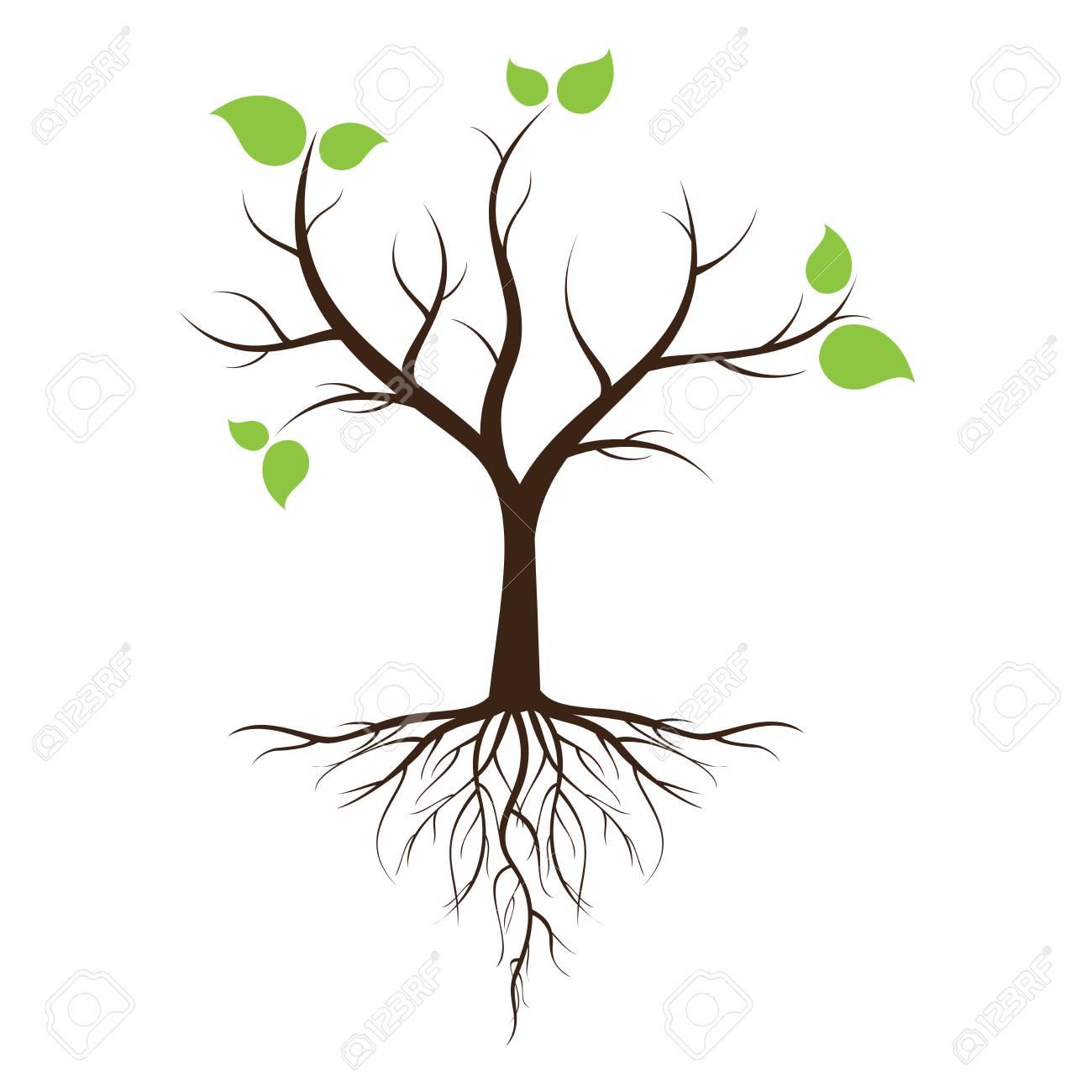 Arbre Avec Racine arbre à feuilles vertes avec des racines avec des arbres isolés sur