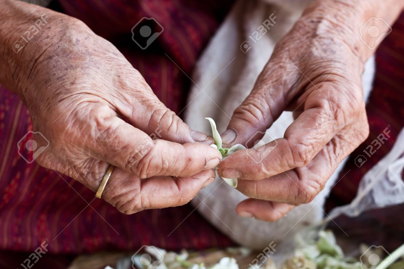 grandmother is working on some flowers Stock Photo - 20434614