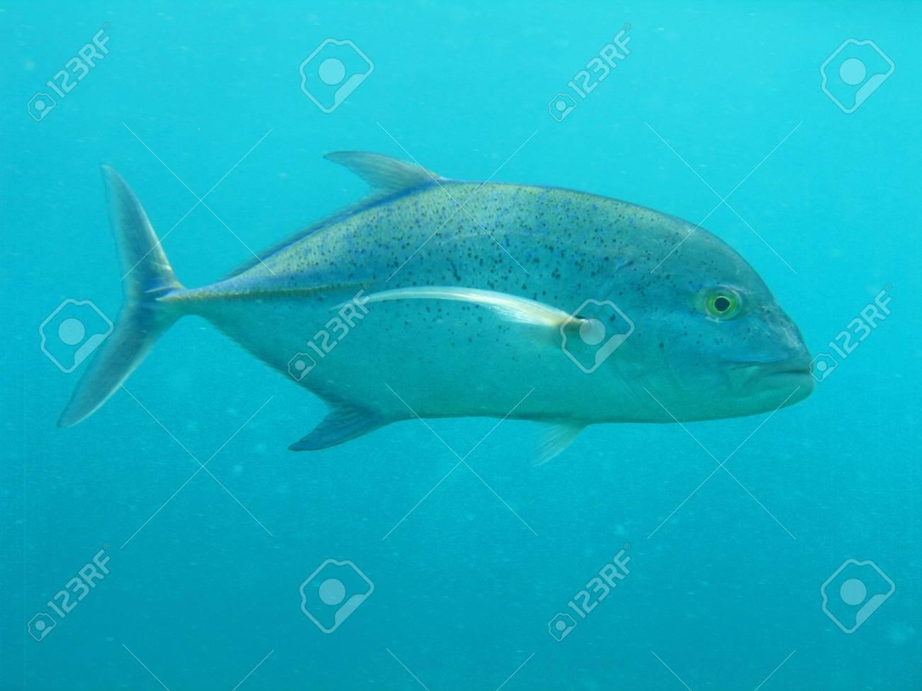 under sea Stock Photo - 14045774