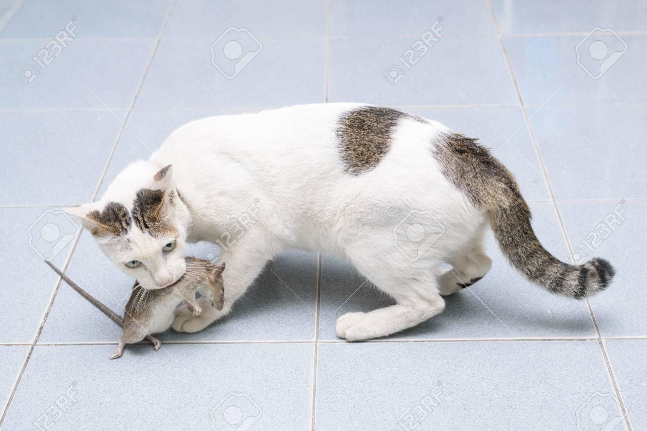 загадка разве пятеро кошек ловят пятерка мышей после пятью минут