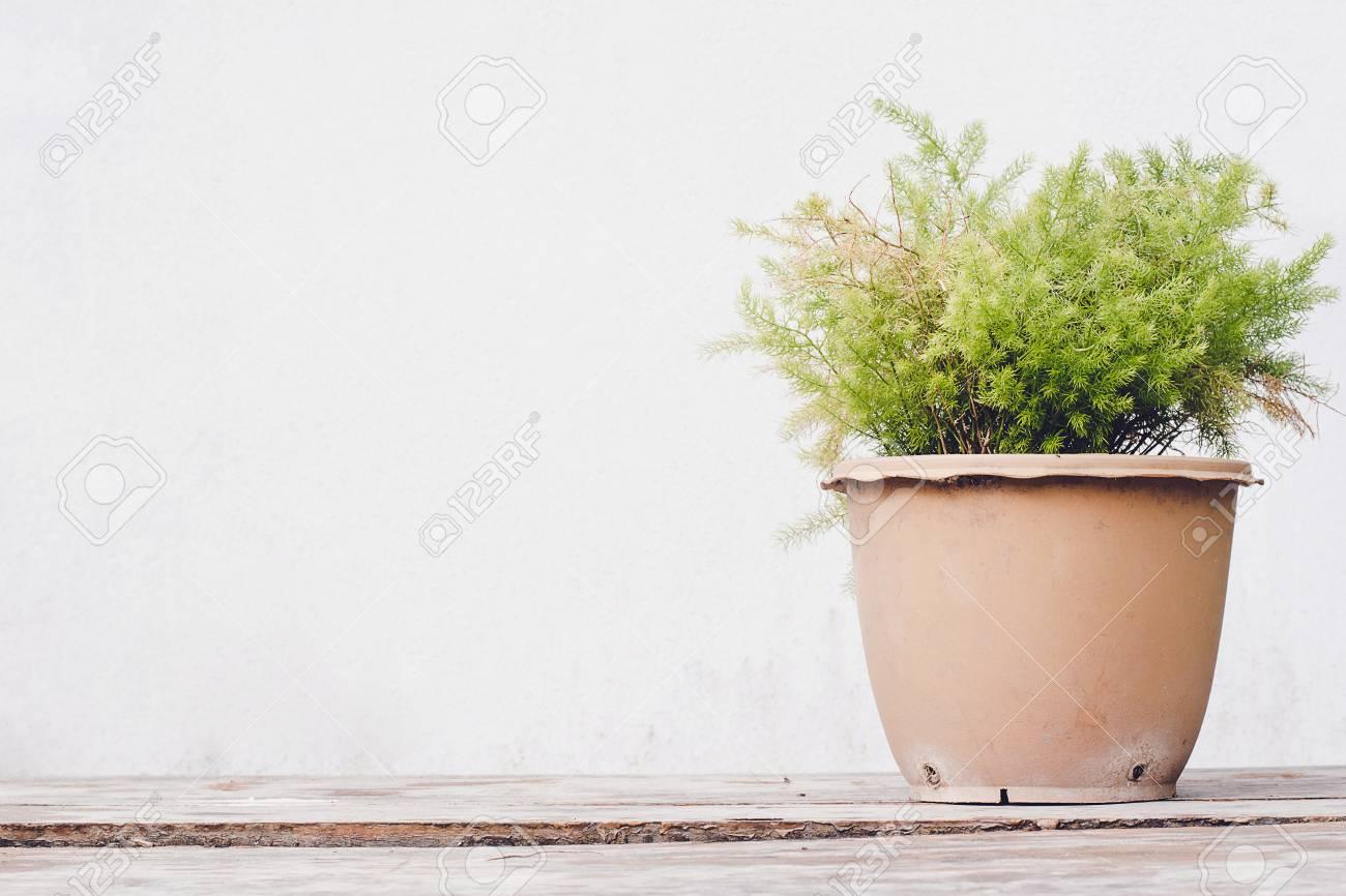Holzfußboden Isolieren ~ Grüner baum in einem topf auf einem holzboden isolieren