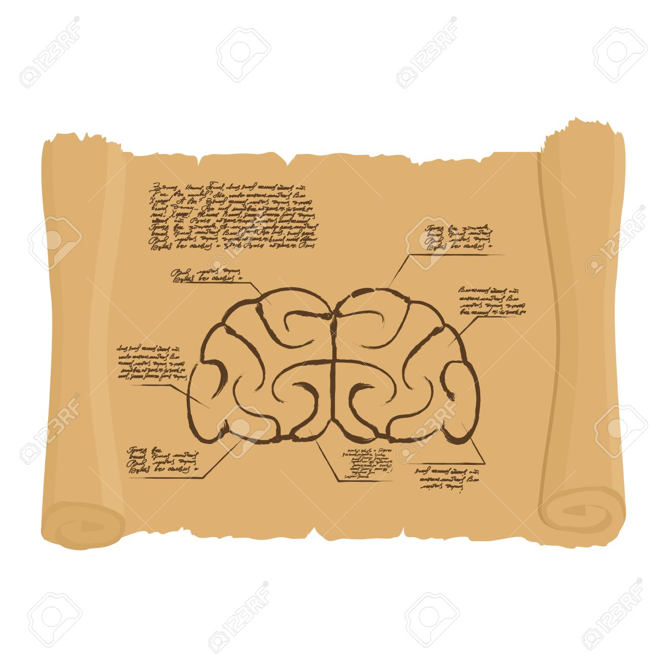 Brain Of Old Scroll Drawing Old Brain Diagram Archaic Human