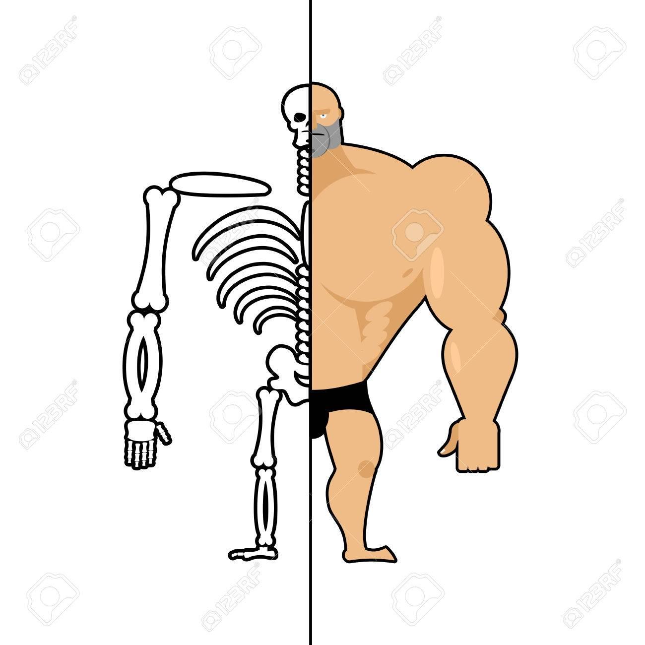 Menschliche Struktur. Skeleton Männer. Anatomie-Bodybuilder. Bau Des ...