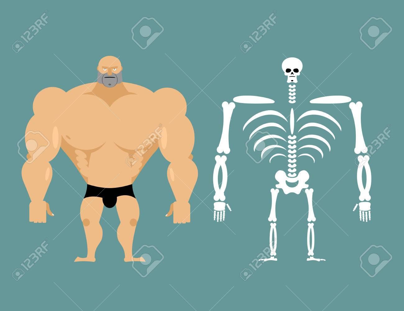 Menschliche Struktur. Skeleton Männer. Bau Von Athleten. Knochen Und ...