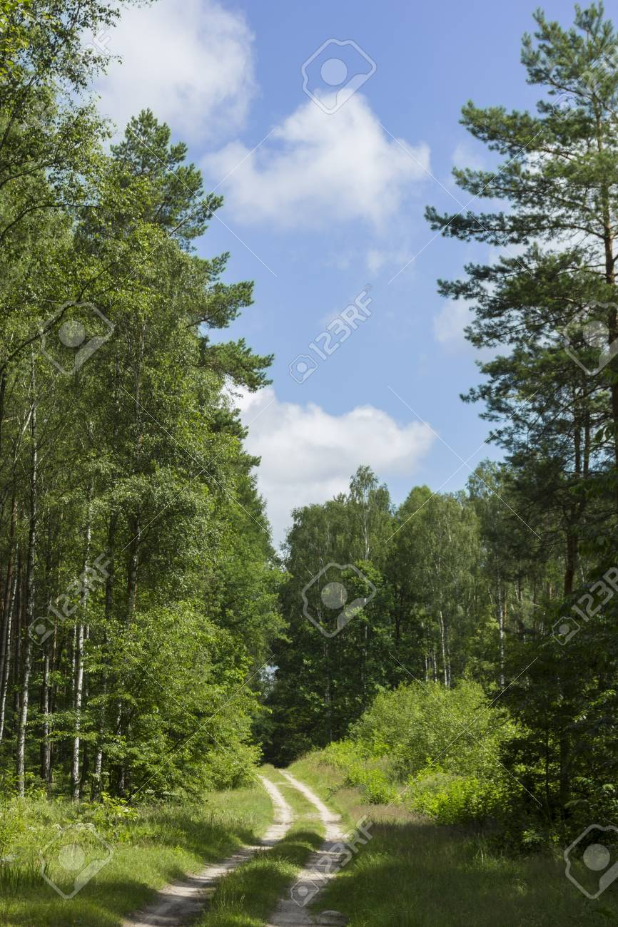 Green forest - 14399187
