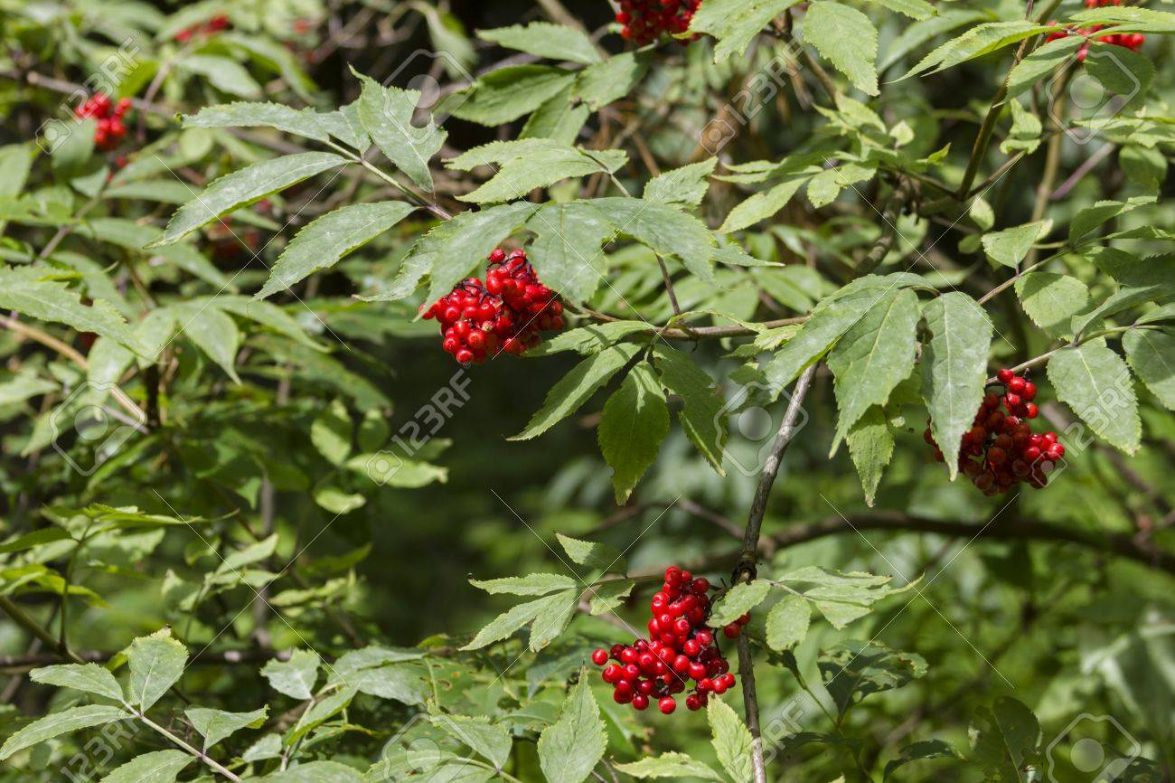 Wild fruits in green forest - 14399167