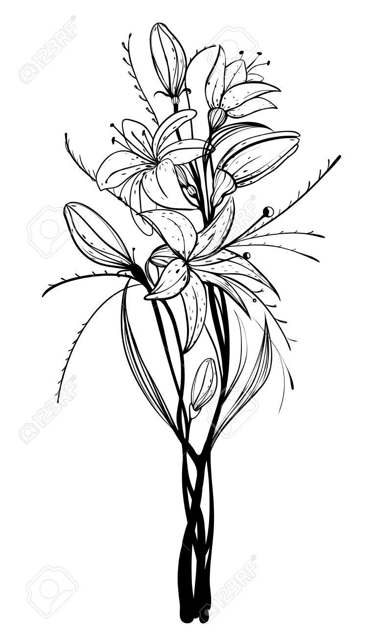 Lily Flowers Outline Illustration