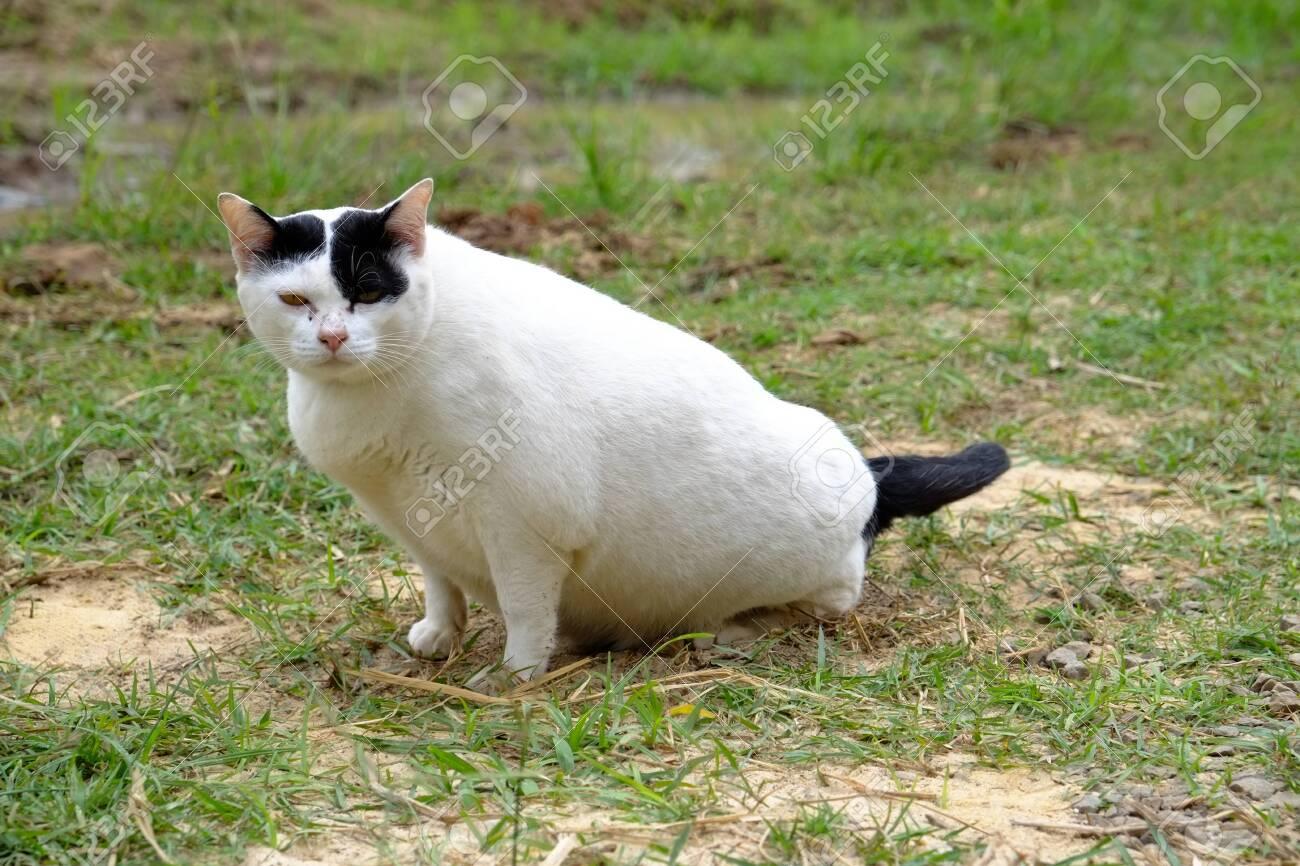 white cat stare at camera - 144130946